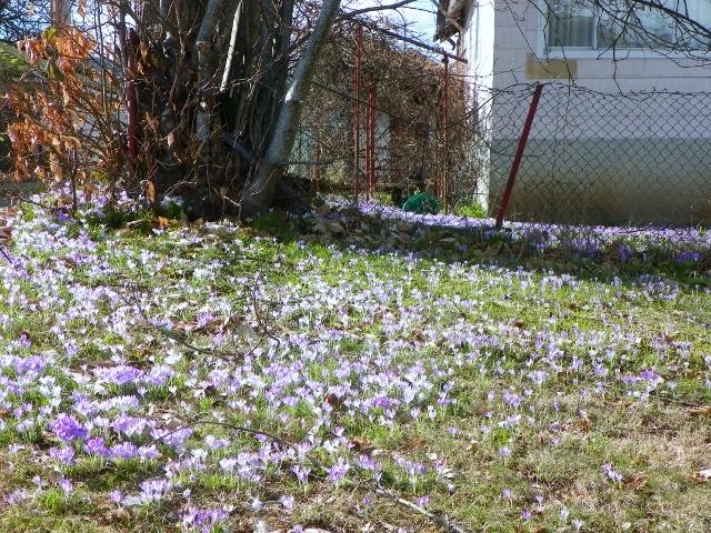 snow in March 018 (640x480).jpg